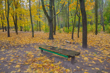 Bench in the autumn park among the fallen leaves