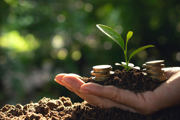 Hand holding coins with plant and soil in hand  for business,finance,saving concept on nature background.