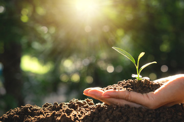 Close-up hand of person holding soil and young plant on the top in soft nature background.