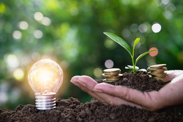 Light bulb with coins in hand and young plant on top saving or energy concept put on the soil in soft green nature background.