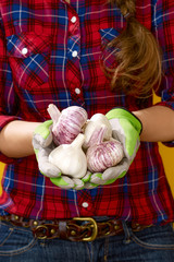 Closeup on woman farmer isolated on yellow showing garlic