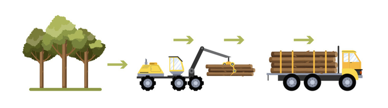 Wood production process. Cutting wood and transportation