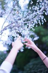ガラスの木と手