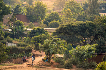 View of bakclit trees and dirt paths on a hillside in Nyamirambo, an outlying, semi-rural suburb of Kigali, Rwanda
