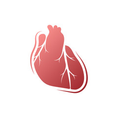 Vector medical heart logo isolated on white background. Human internal organs.