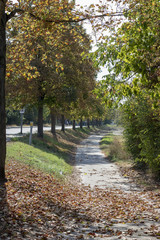 Herbstlandschaft in Frankenthal