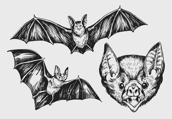 Set of bat. Hand drawn sketch converted to vector.