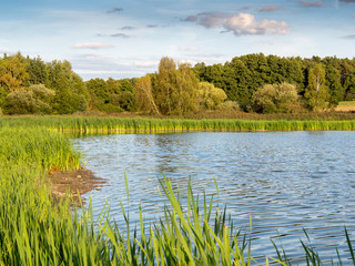 Summer landscape with lake.