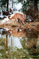 Wall Mural - Cougar Pond Reflection