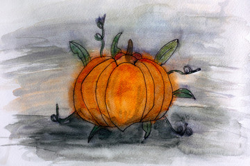 Pumpkin. Watercolour hand drawing.