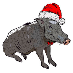 New Year's print. Boar in Santa Claus hat. Vector pig.