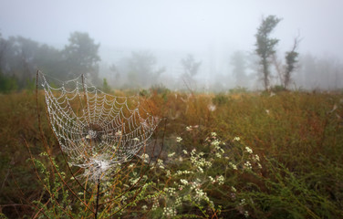 Beautiful autumn landscape. Cobweb covered with drops from the early morning mist