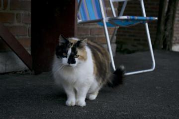 Gato multicolor