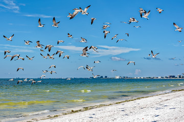 Gulls flushed from beach