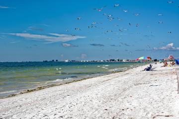 Gulls swarming on beach