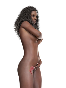 3d rendered medically accurate illustration of pregnan black woman - week 8