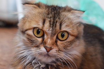 Cute furry cat close up. Looking for a master