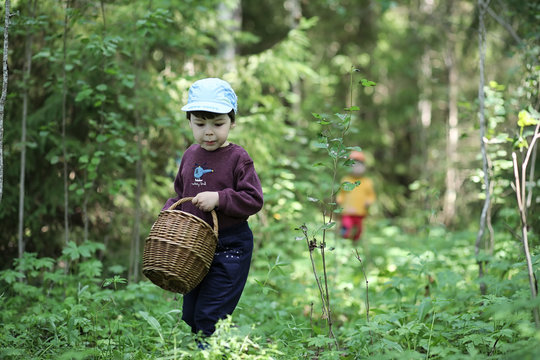 Children go to the forest for mushrooms