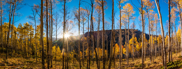 Fall Aspen Sunset