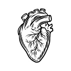 Human heart organ icon. Hand drawn illustration of human heart organ vector icon for web design