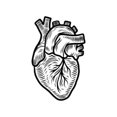 Anatomical heart organ icon. Hand drawn illustration of anatomical heart organ vector icon for web design