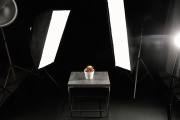 Interior of modern photo studio with table, cactus and professional lighting equipment