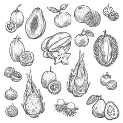 Exotic tropical fruits isolated sketches