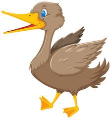 Happy duck white background