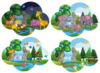 Set of animals in scenes