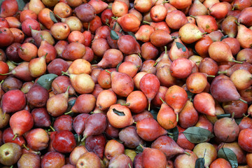 close up on red pears in the harvest season