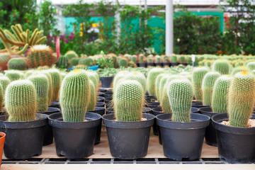 Beautiful green cactus plant in flowerpot