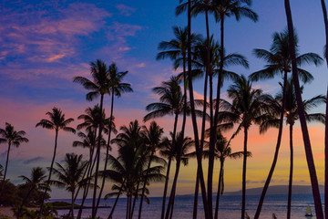 coulorful sunset with palm trees silhouettes