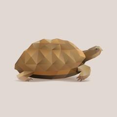 polygonal turtle, tortoise vector illustration