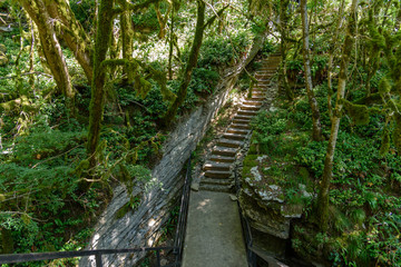 Staircase in rocky rainforest valley
