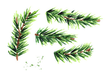 Fir branch set. Watercolor hand drawn illustration, isolated on white background