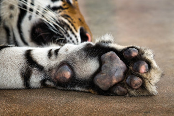 Under the feet of the Asian tigers.