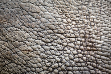 Foto op Aluminium Neushoorn Skin of rhinoceros