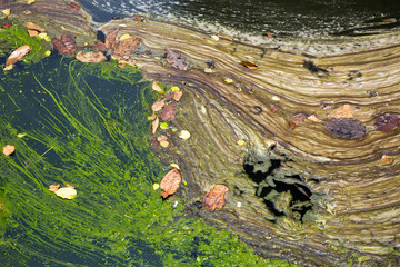 Colorful patterns of dirt on the water.