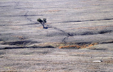 Tracks made by sheep can be seen in a drought-effected paddock on a farm located on the outskirts of the town of Coolah in central New South Wales