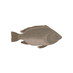 Small sea or river fish with brown fins. Marine animal. Seafood theme. Flat vector for product packaging or cafe menu