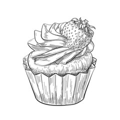 Hand drawn cupcake with strawberry, vintage etching, food sketch engraving, pen and ink line art isolated on white background. Vector illustration.