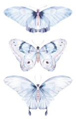 Watercolor butterfly. Natural isolated insect set on white background. Hand drawn illustration