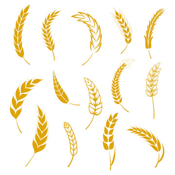 Set of simple wheats ears icons and grain design elements for beer, organic wheats local farm fresh food, bakery themed wheat design, grain, beer elements, wheat simple. Vector illustration