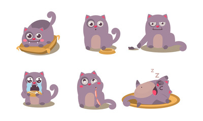 Cute grey cat set, funny animal character in different situations vector Illustration on a white background