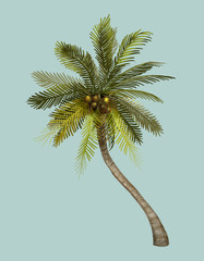 Tropical coconut palm tree illustration