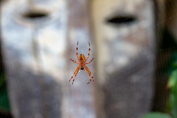 Araignée devant un masque dans le jardin