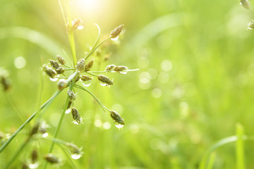 Nature green meadow and waterdrop background