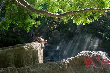 LingShui County south bay monkey island of hainan province