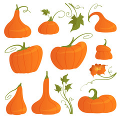 Set of bright pumpkins of different shapes with leaves and flower isolated on white background. Vector illustration