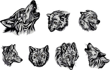 Wolf, portrait, white, black, color, vector, graphics, drawing, picture, stylization, image, isolated, illustration